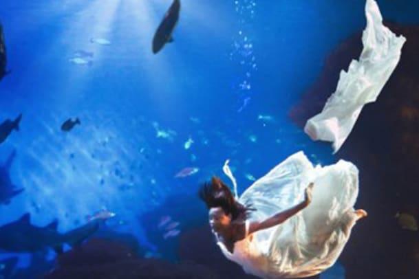 Heiraten im Haibecken