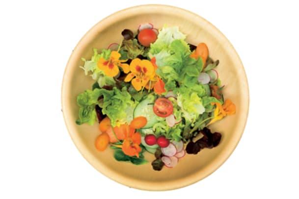 Salat – Gartenfrisch auf den Tisch
