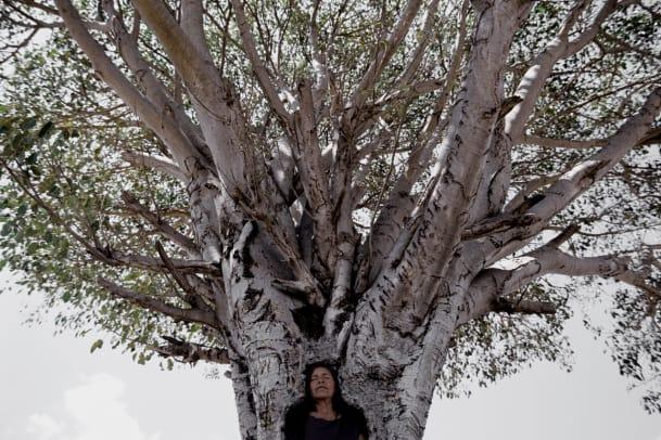 Kunst-Tipp: About Trees im Zentrum Paul Klee Bern