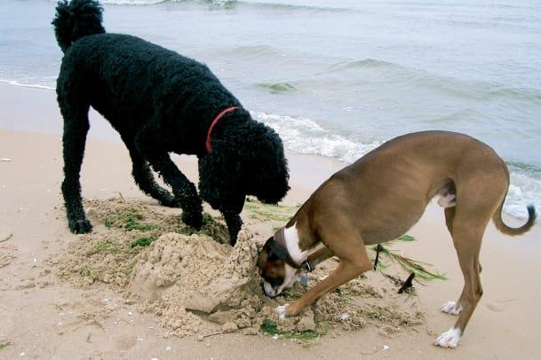 Hund und Strand