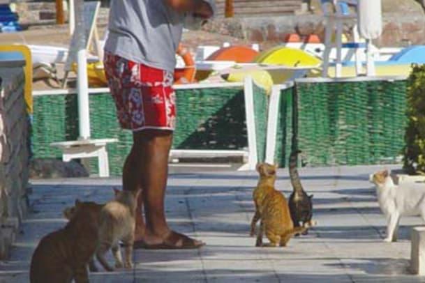Tierfreundliche Hotels