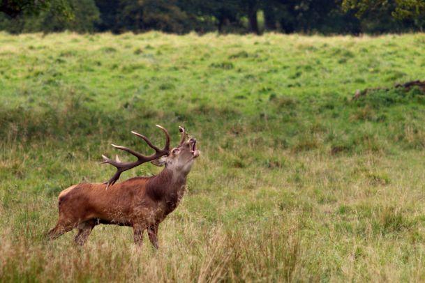 Plüss Punkte – Ängstliche Hirsche