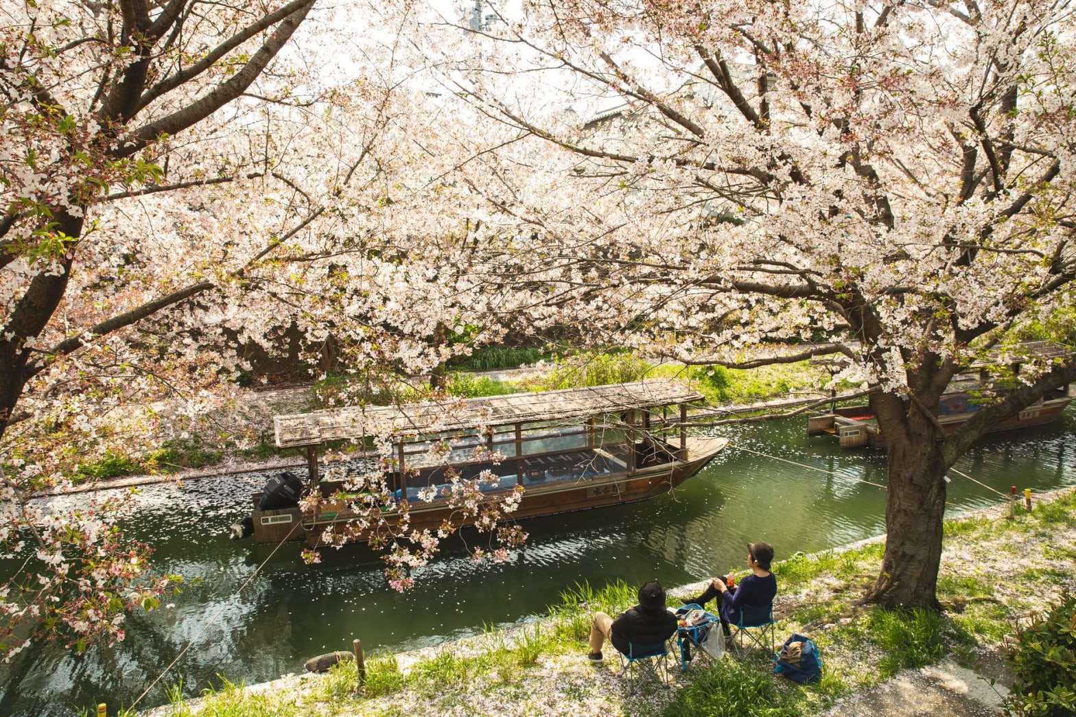 couple chilling under blooming sakura trees near river channel