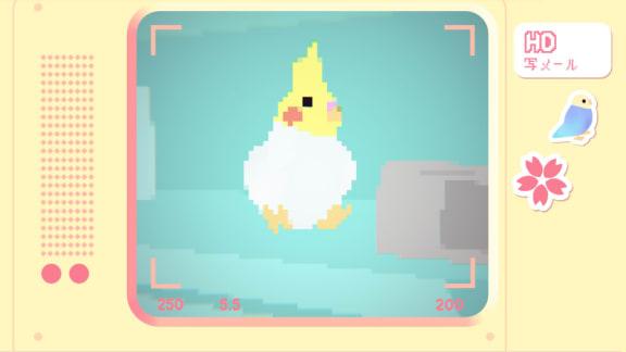 Toripon är ett spel där du tar bilder på söta fåglar och jösses vad fint det är
