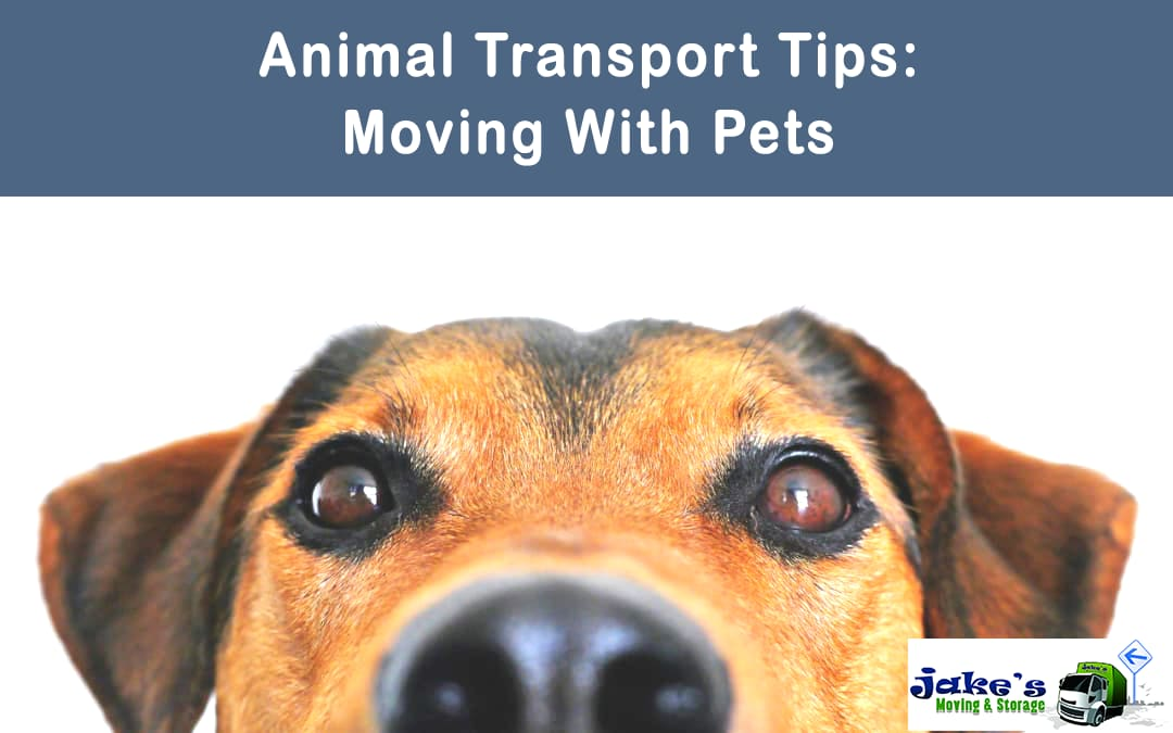 Animal Transport Tips: Moving With Pets - Jake's Moving and Storage