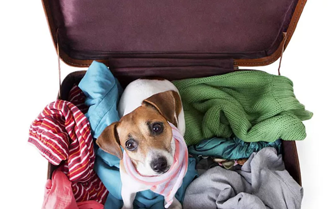 Animal Transport Tips: Moving With Pets Animal - Jake's Moving and Storage