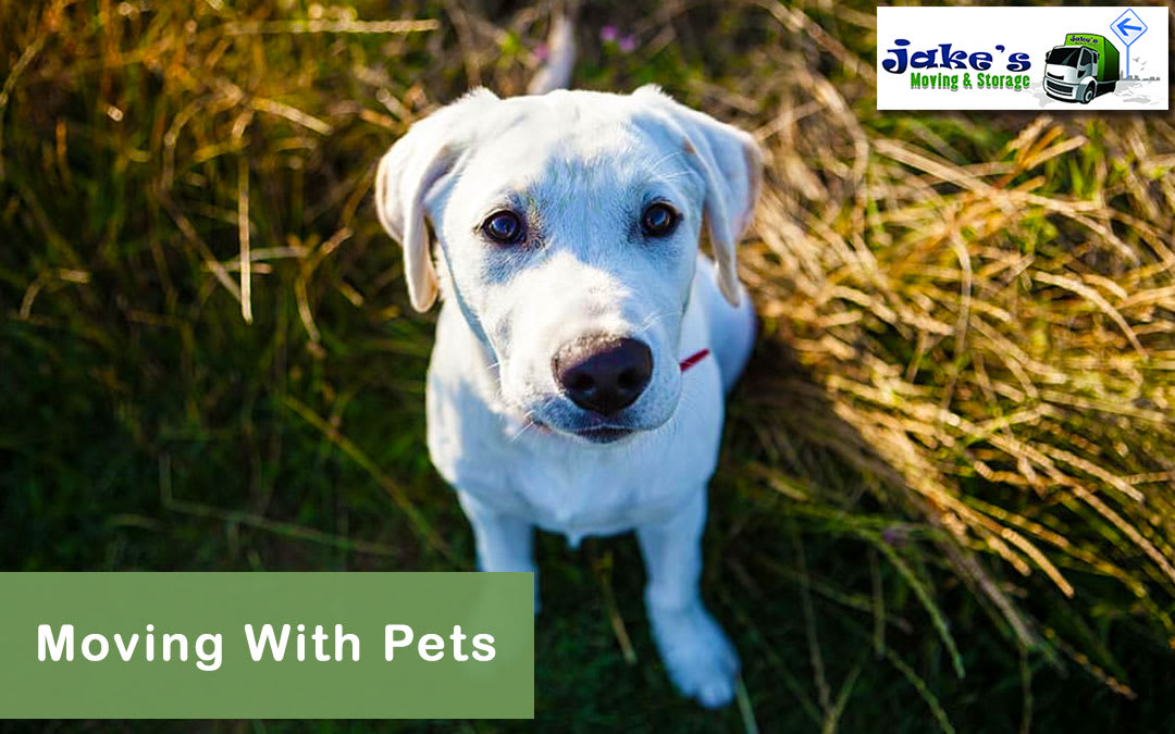 Moving With Pets - Jake's Moving and Storage