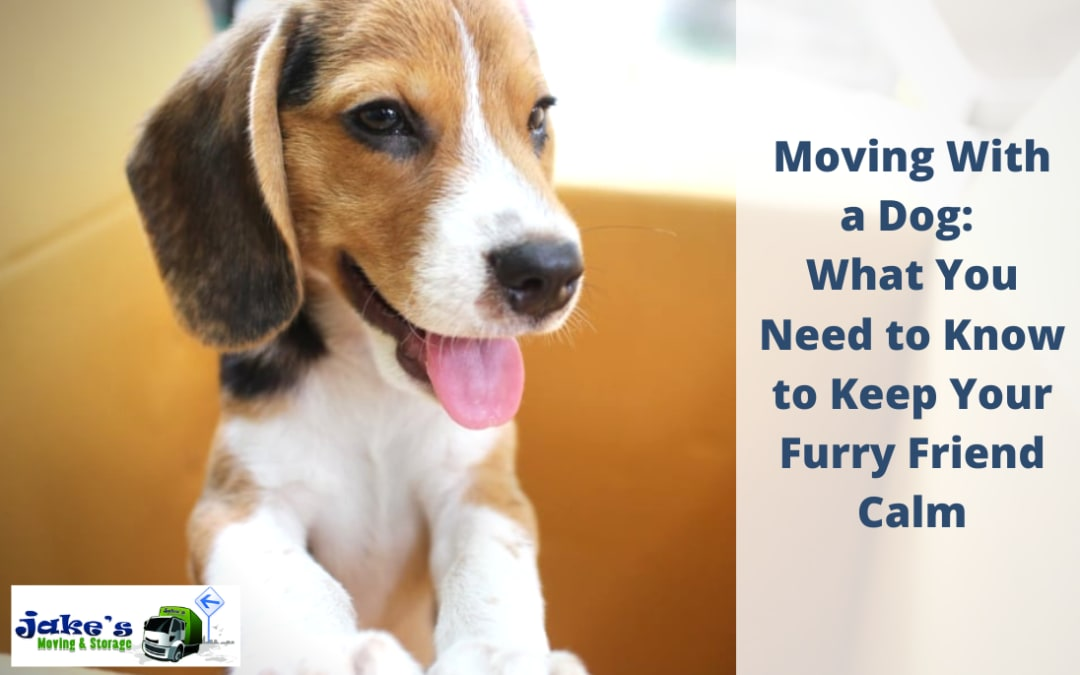 Moving With a Dog: What You Need to Know to Keep Your Furry Friend Calm - Jake's Moving and Storage