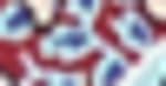 Westport Paisley Knit Top - Misses - 3