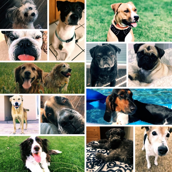 Collage of OptimumHQ dogs