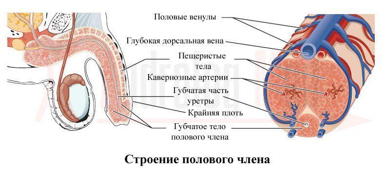 Кавернит  подробная информация о патологии и ее лечении