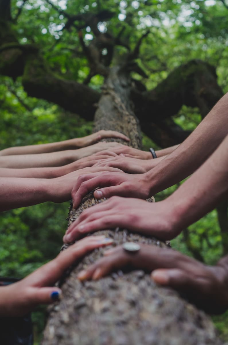 hands on a tree, photo by Shane Rounce