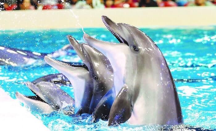 Dubai Dolphinarium Tickets