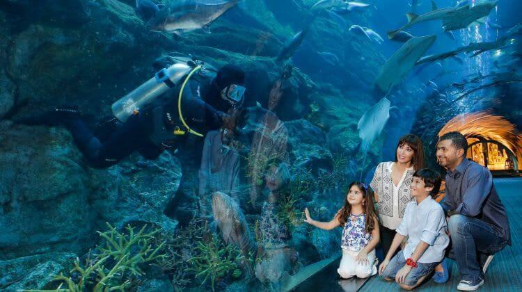 تذاكر دبي أكواريوم وحديقة الحيوانات المائية