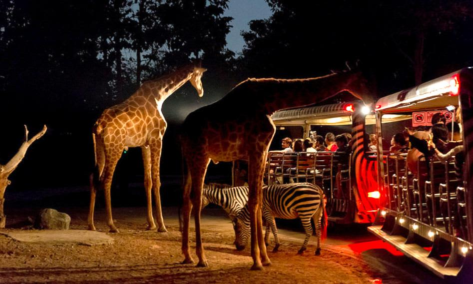 Night Safari Singapore Tickets