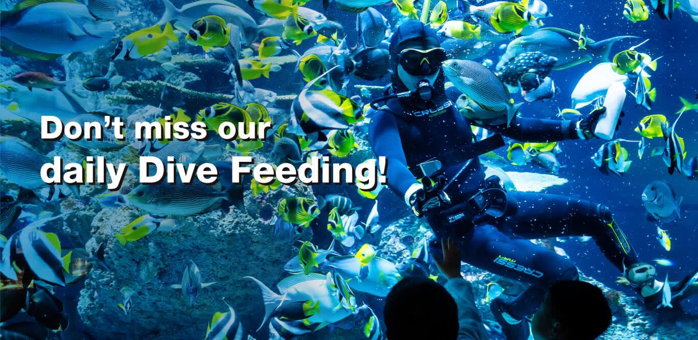 SEA Aquarium Singapore Tickets