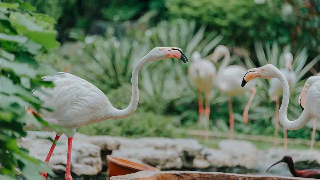 Singapore Zoo Tickets