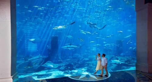 The Lost Chambers Aquarium Tickets
