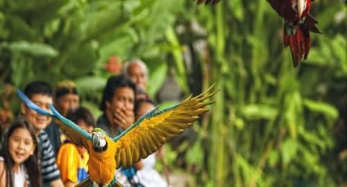 Bali Bird Park Tickets