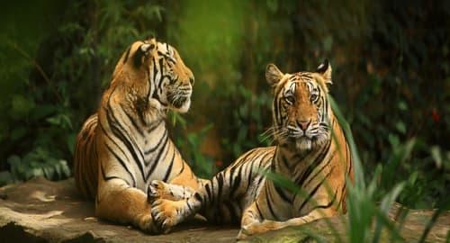 Bali Zoo Tickets