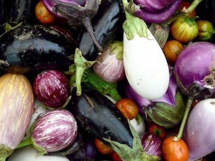 Patlıcan Hakkında Ne Biliyoruz?