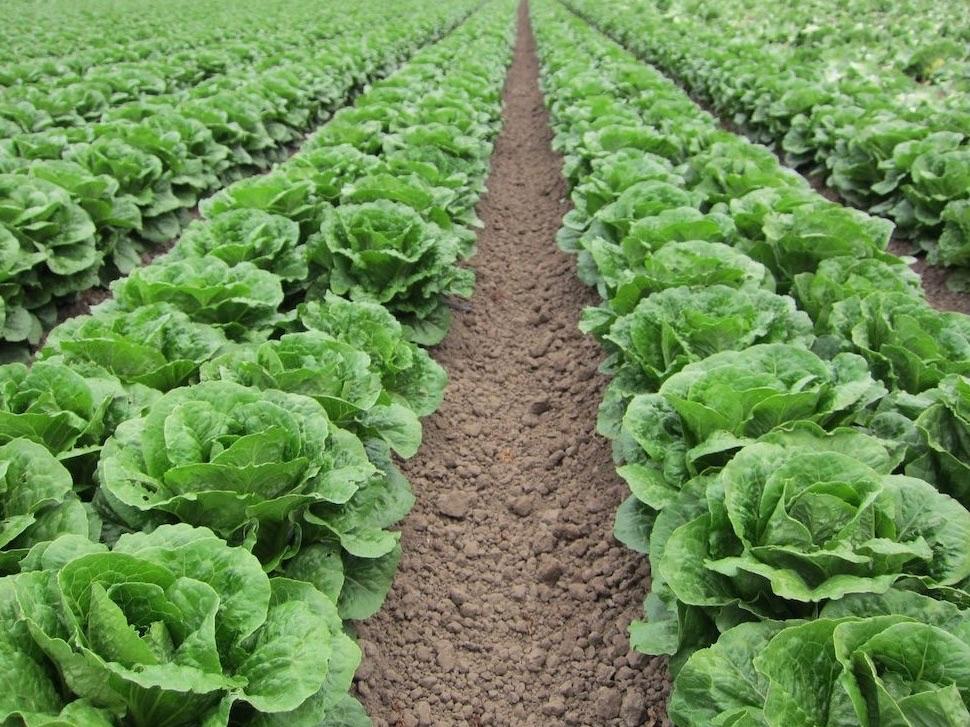 Teknoloji İdeoloji ve Yemek