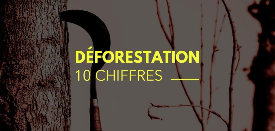 10 Chiffres sur la Déforestation en France (et son évolution)