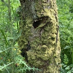 A tree with a whole in it