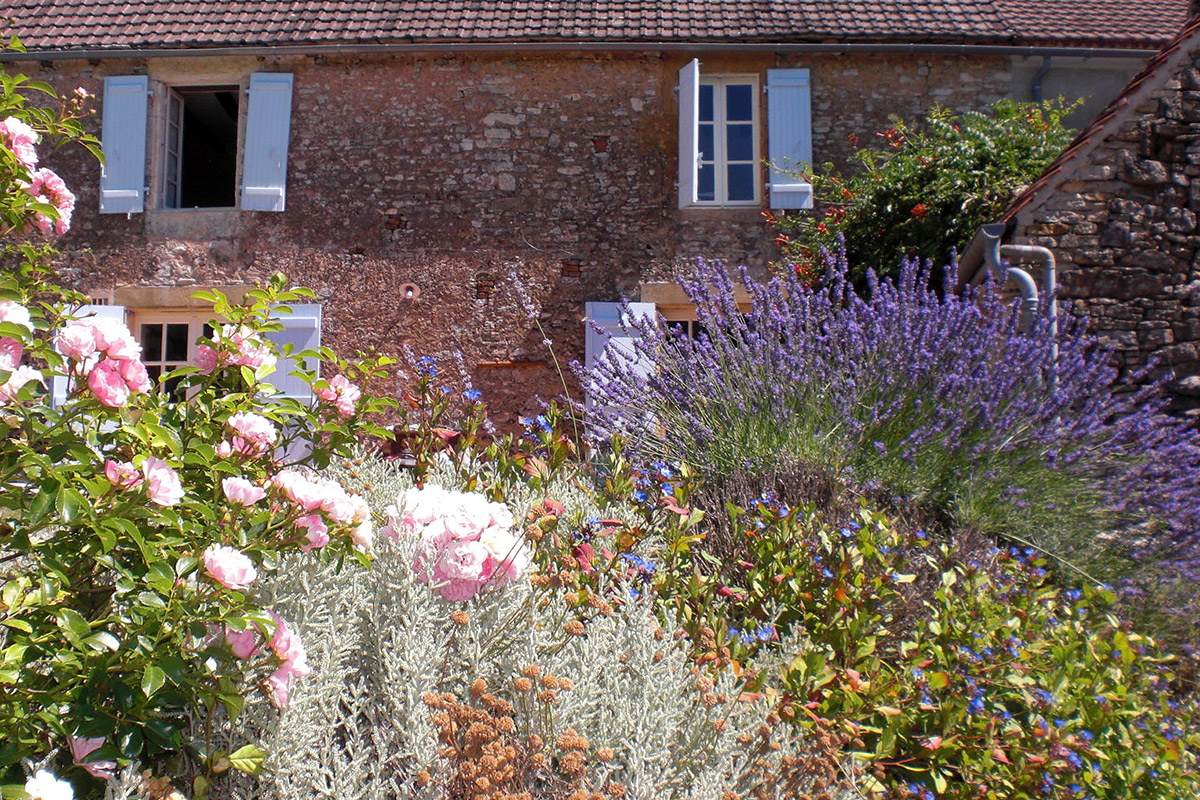 lavender bushes in front of the house
