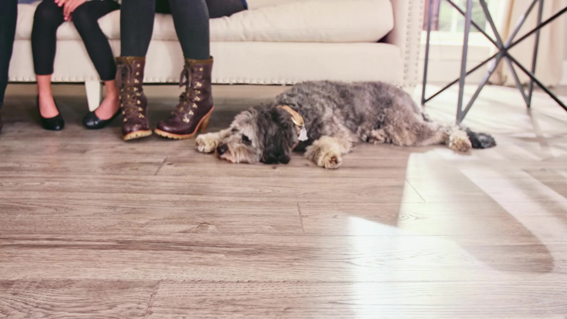 Wood flooring, dog sleeping
