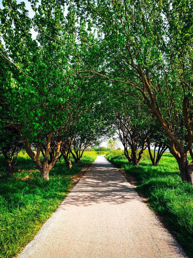 A Path Lined With Dark Green Trees