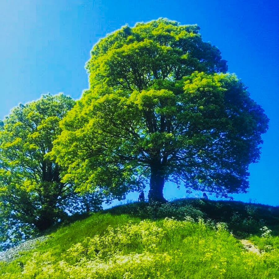 Bright Green Tree on a Grass Covered Hill