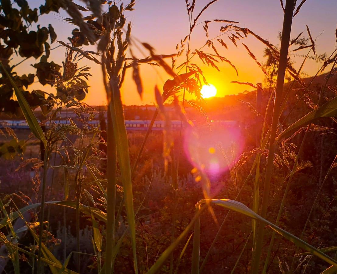 A Train Running Through a Field as the Sun Sets