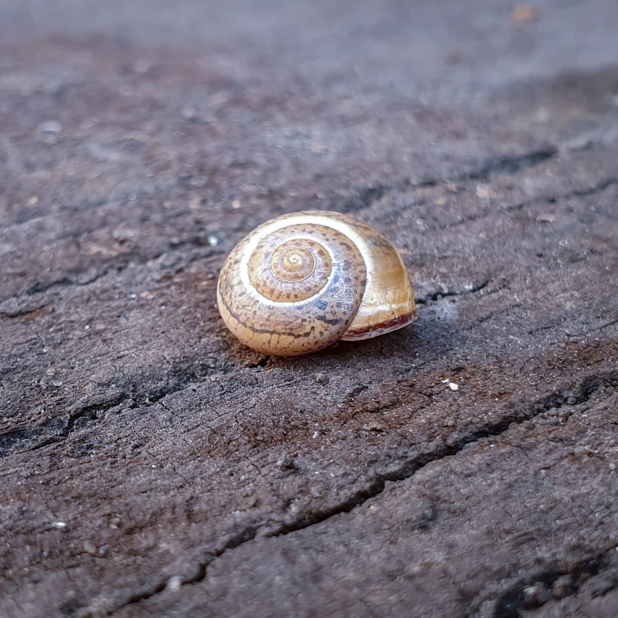 An Empty Shell On A Old Wooden Plank