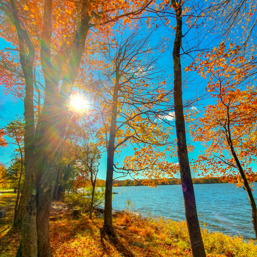 The Sun Shinning through The Autumn Leaves By a Lake