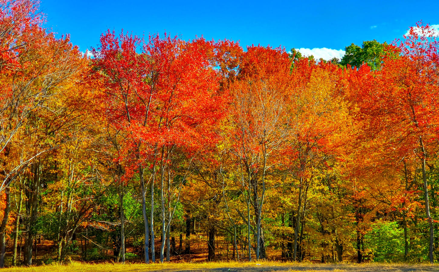 10 Tips for Great Autumn Photography