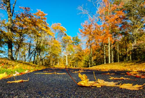 Fallen Autumn Leaves on the Black Pavement