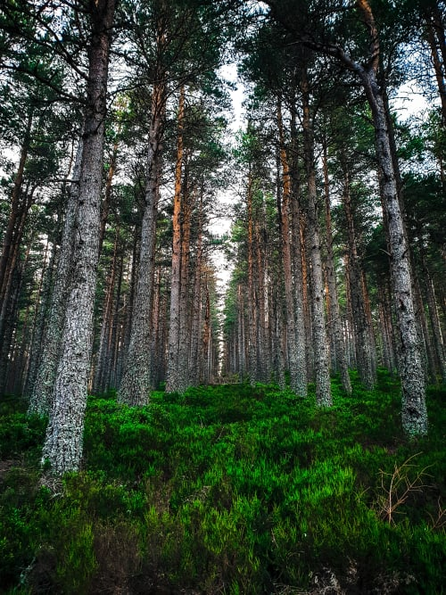 Long Corridors Lined By Tall Trees