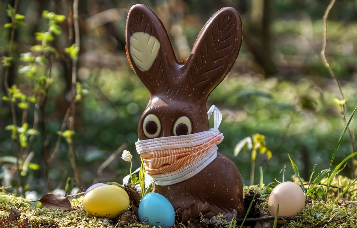Easter bunny made of chocolate with a face mask surrounded by colorful Easter eggs on green grass