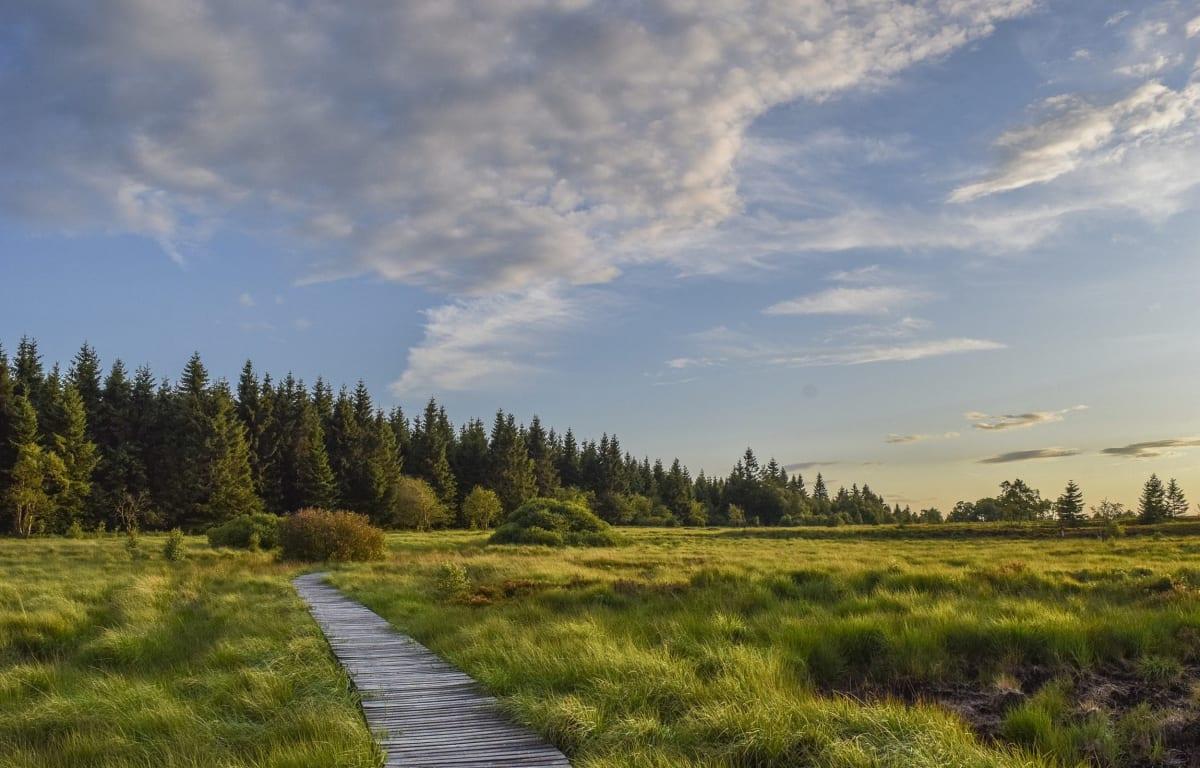 Der Naturpark Hohes Venn-Eifel liegt in Nordrhein-Westfalen an der Grenze zu Belgien. Die grünen Wiesen und Tannen unter blauem Himmel sind ein inspirierender Ort