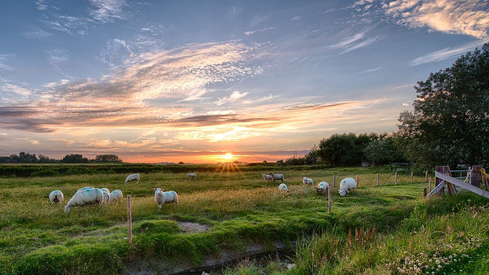 best places to visit in germany - pellworm sunrise sheeps