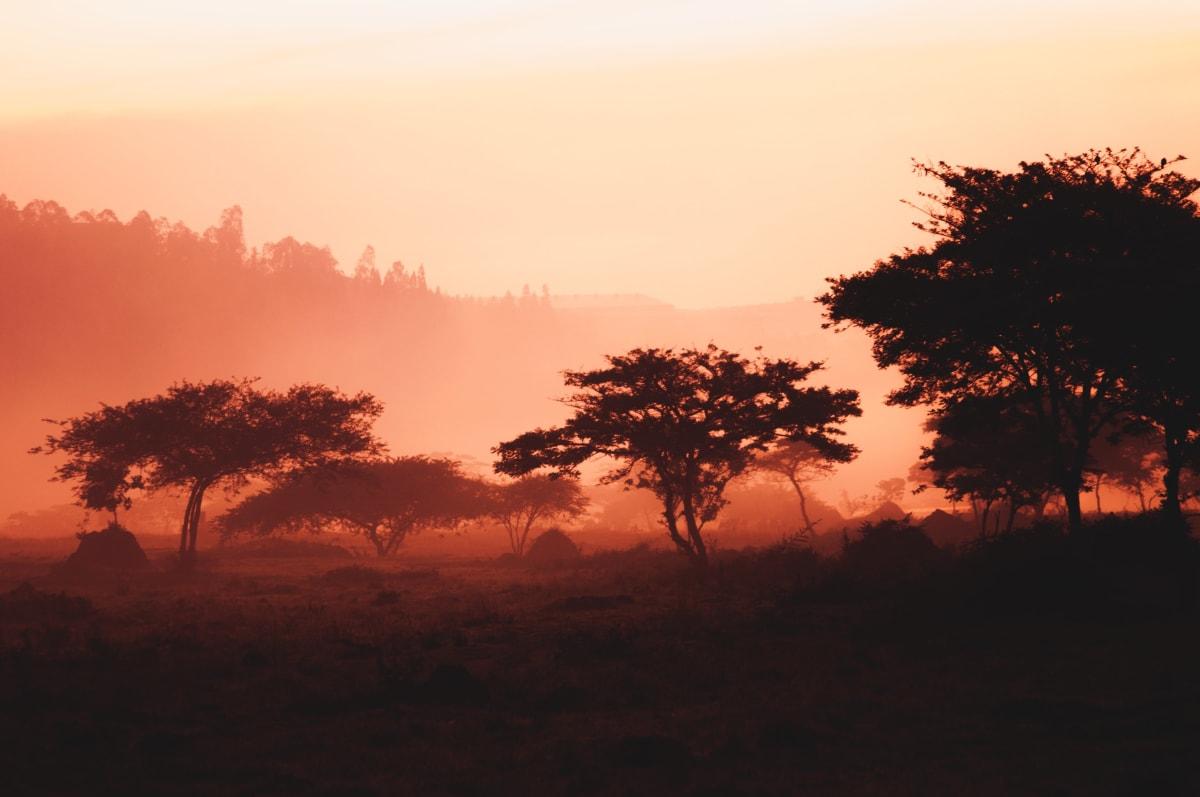Sonnenaufgang in Ruandas Wäldern