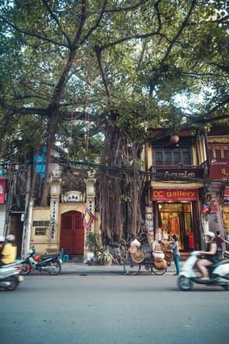 Riesige Bäume in der Stadt Hanoi