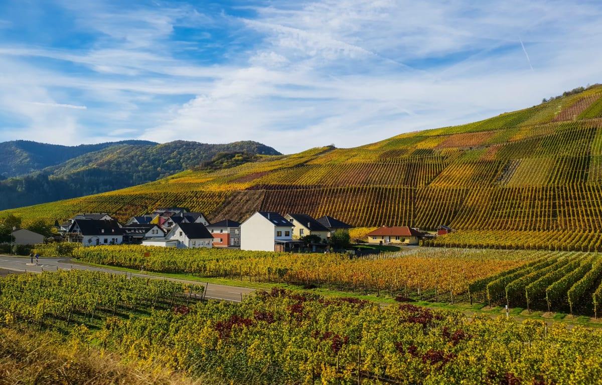 Die südliche Weinstraße in Rheinland-Pfalz mit zahlreichen Weinbergen und einem kleinen Dorf in der Mitte unter blauem Himmel. Ein gute Region für einen Wochenendtrip.