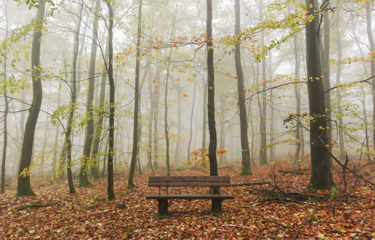 Holzbank inmitten eines hessischen Waldes im leichten Nebel