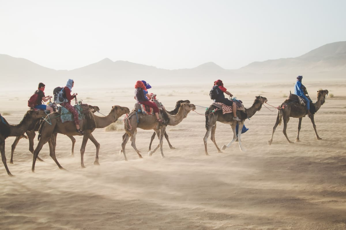 Camels with travelers in the desert.