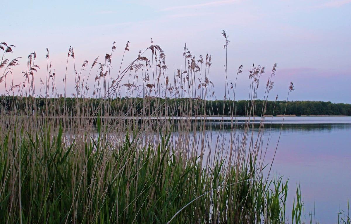 Bild von einem See in Mecklenburg Vorpommern im Sonnenaufgang mit Schilf im Vordergrund