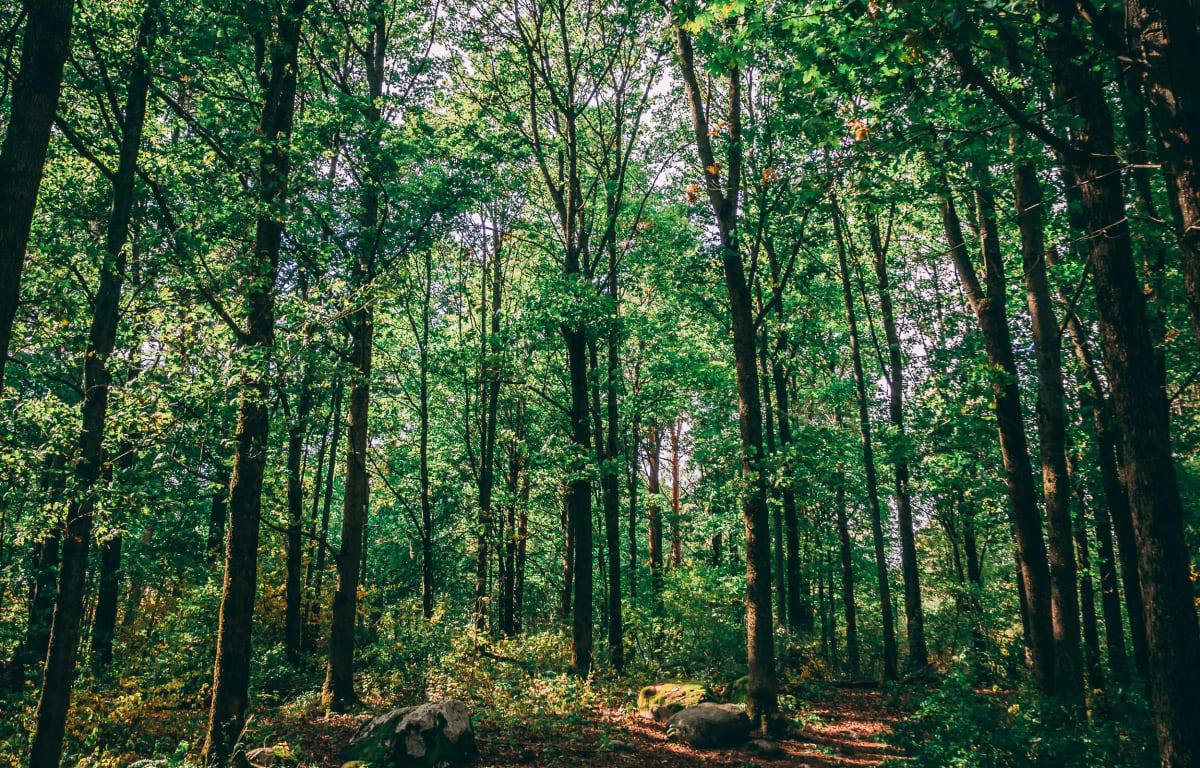 Der Spreewald in Brandenburg, ein Inspirierender Ort in Deutschland voll von dunkelgrünen Bäumen wie in einem Dschungel