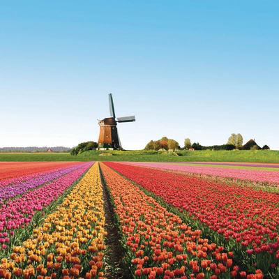 Holland med Blomstertåget & Floriaden