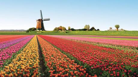 Res till Holland